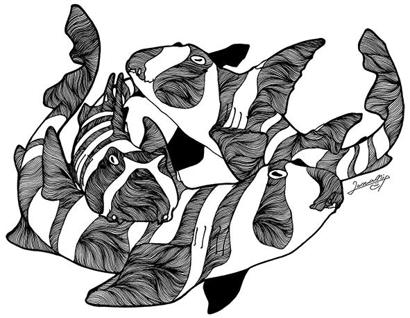 Japanese_bullhead_shark